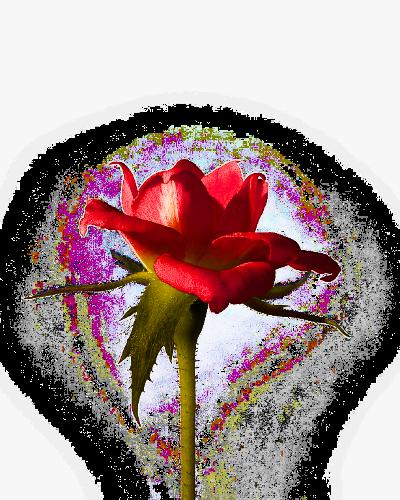 roos_inter2_kl